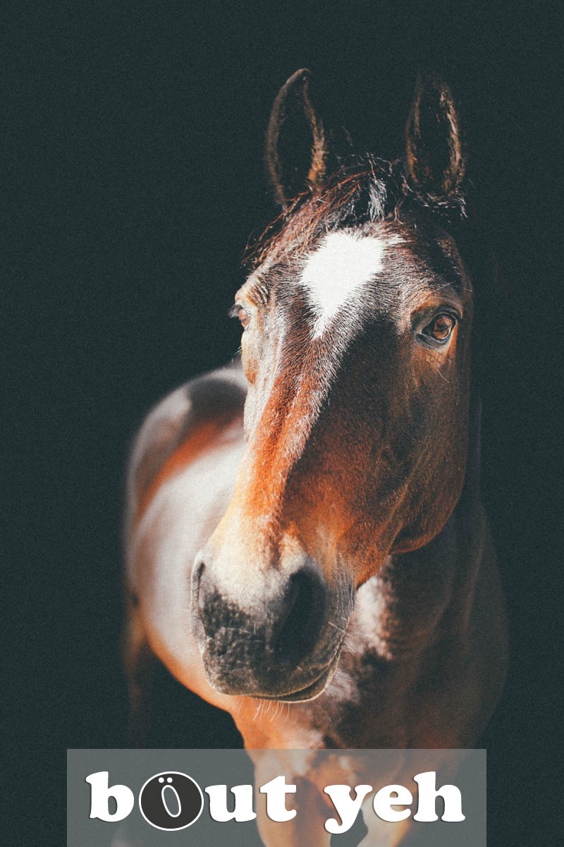 Photograph of Meg the horse, by Jamie, Northern Ireland.
