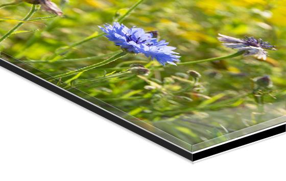 Photo in acrylic glass mount.