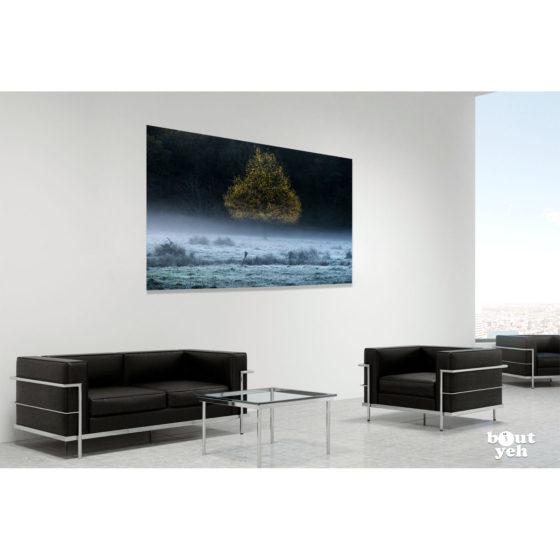 Pear Shaped Tree 2, Northern Ireland. Irish landscape photograph in room setting, by Joshua Clarke.
