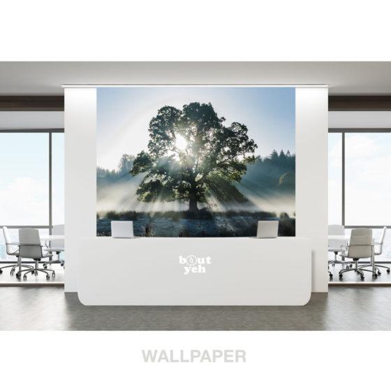 Light Scatter Tree 2 landscape photo of Ireland photographic wallpaper.