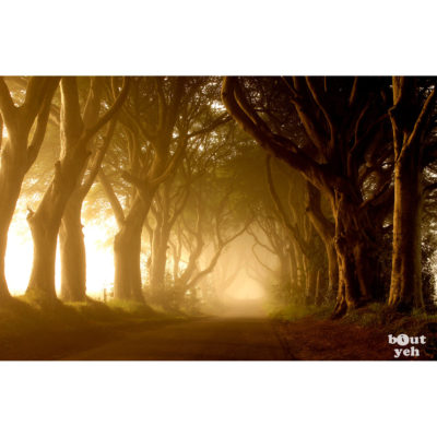 The Dark Hedges Game of Thrones location, Northern Ireland - photographic print for sale. Photo by Glenda Hall.