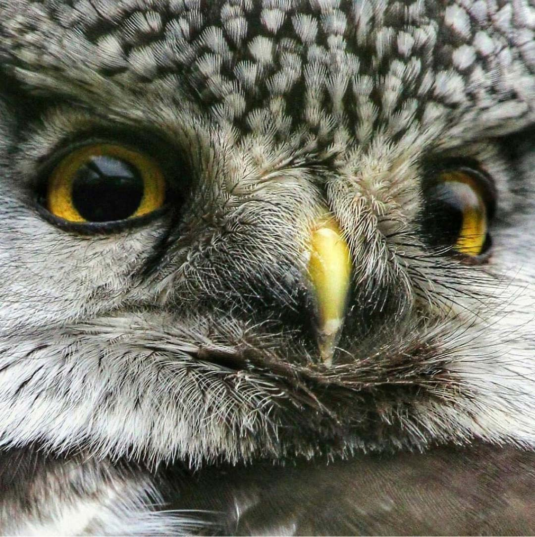 The World Of Owls Randalstown photo shared by Bout Yeh photographers Belfast - IMG_5760